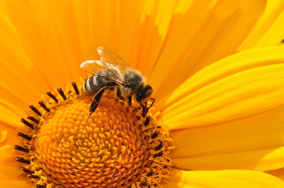 Развитию мозга у насекомых поспособствовал паразитизм, а не социальность?