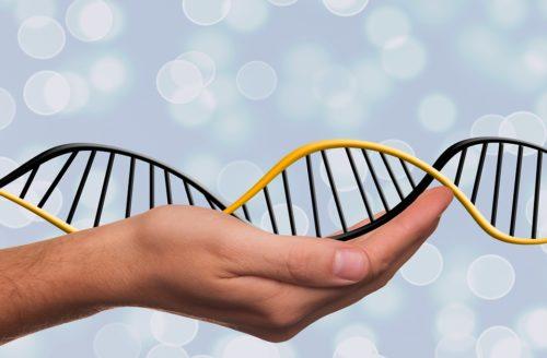 Естественный отбор может восстанавливать нарушенное мутациями определение пола