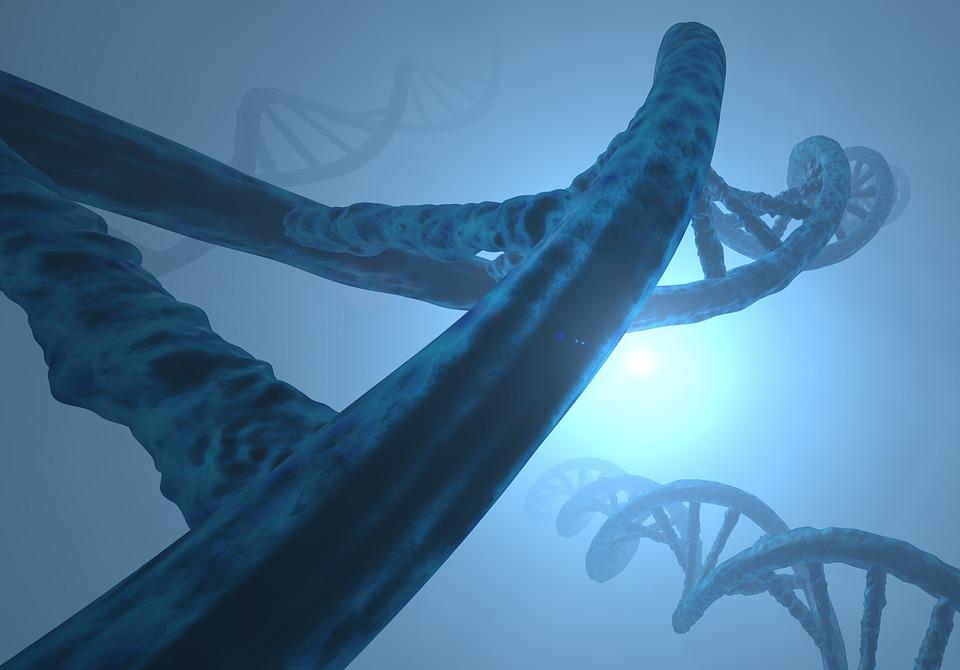 Новым копиям старых генов свойственно приобретать новые функции
