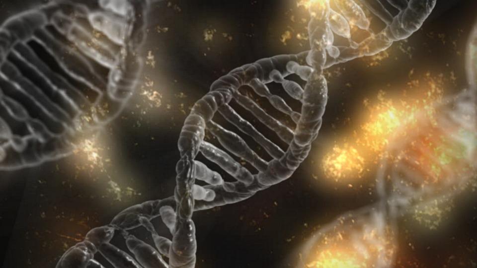 Перемешивание генов и взаимообогащение культур