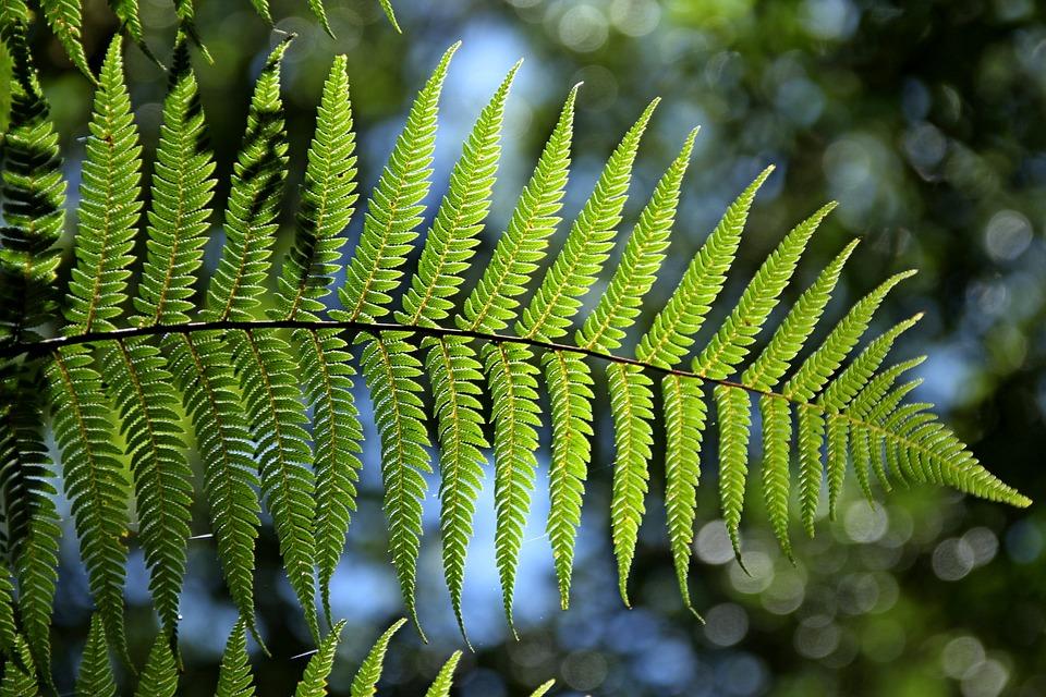 Помогло ли глобальное оледенение появлению высших растений?