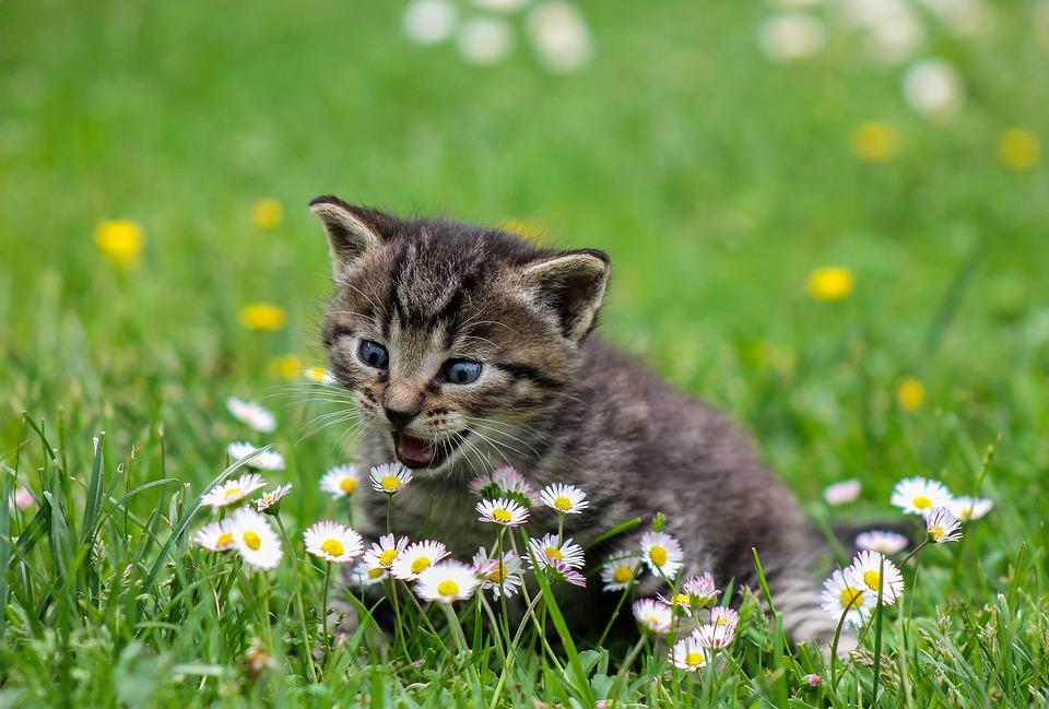 Домашние кошки и дикая природа