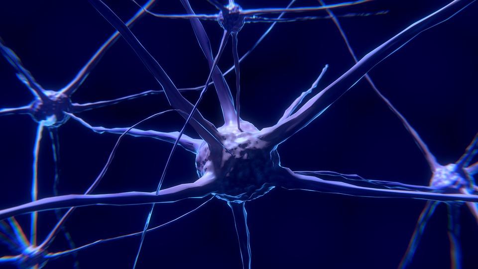 Нижегородская нейронаука