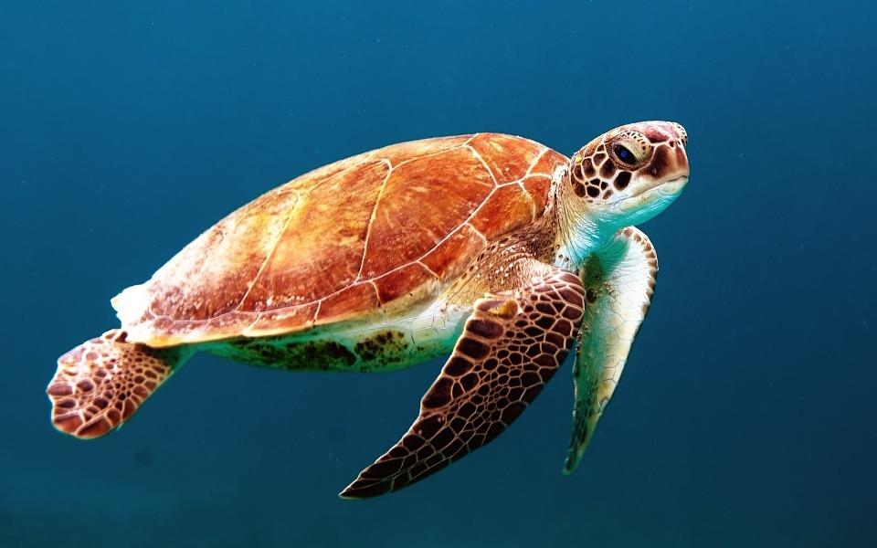 Мессель: о чем рассказали черепахи