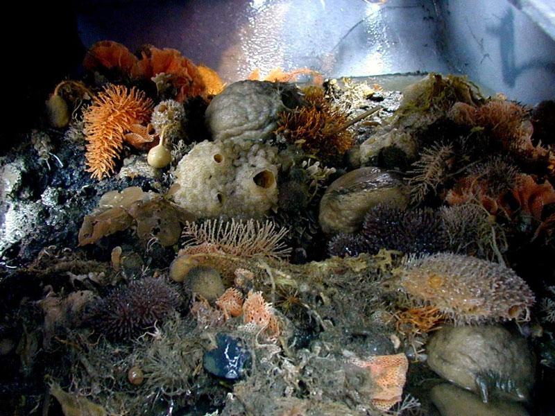 Подводный мир Антарктики – далекий и близкий